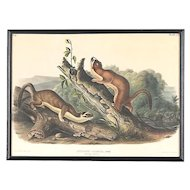 Antique Audubon Lithograph-Hand Colored by Bowen-Imperial Folio Pl. 60-Male Weasels c.1845