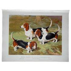 Antique Dog Lithograph-Basset Hounds