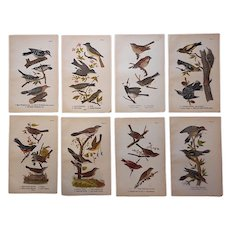 Antique American Bird Lithographs- Set of 8