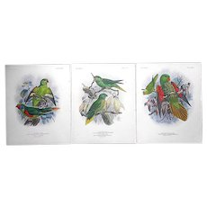 Set Of Three (3)-Antique 19th C. Parrot Lithographs-Period Hand Color-Varieties Of Lory