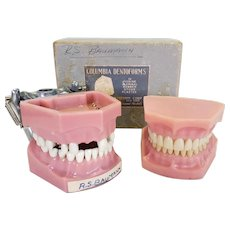 Two Vintage Columbia Dentoforms Sets of Teeth Dental School Instructional Items