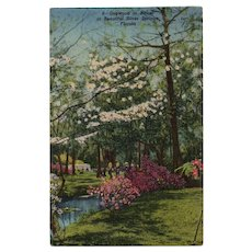 1953 Dogwood in Bloom at Beautiful Silver Springs Florida Linen Postcard