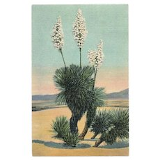 1948 Yucca Plant in Bloom Linen Postcard New Mexico Southwest