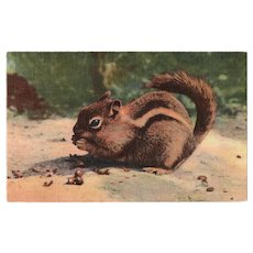 1941 Chipmunk Eating an Acorn Linen Postcard
