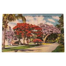 1951 Royal Poinciana & Jacaranda Trees Florida Street View Linen Postcard