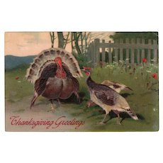 1908 Embossed Thanksgiving Greetings Postcard Turkeys Germany