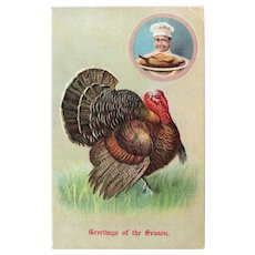 1907 Embossed Thanksgiving Postcard Turkey & Chef with Cooked Turkey