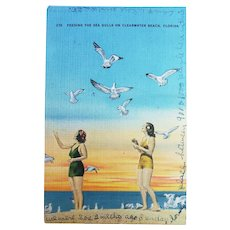 1946 Feeding Seagulls On Clearwater Beach Florida Vintage Linen Postcard