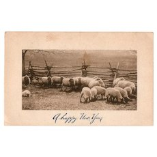 1910 A Happy Near Year Field of Sheep Vintage Postcard