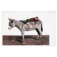 ca1905 UDB A Noonday Siesta Little Boy Sleeping On Donkey's Back Humor Postcard