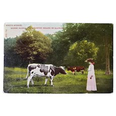 1917 Vintage Comic Postcard Who's Afraid Woman Staring Off With A Cow