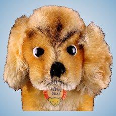 Steiff Revue Susi Seated Cocker Spaniel Puppy Dog Glass Google Eyes ID Tiniest Sister