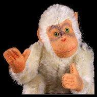 Rare Big Brother Steiff 5xJointed White Jocko Chimpanzee Ape (NOT Monkey!) Early ID