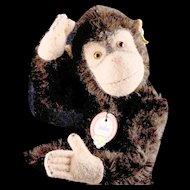 Earliest Model Little Brother 5xJointed Steiff Jocko Chimpanzee (NOT Monkey) All ID