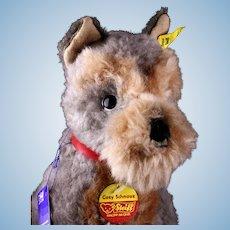 Not Often Seen Steiff Seated Schnauzer Puppy Dog Cosy Schnauz All ID Plus...