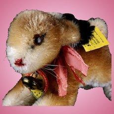 Tiny Baby Brother Steiff (Pre Hoppy) Hase Rabbit Bunny All ID