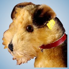 Rare Sweet Handsome 1950s Steiff Terry Airedale Terrier Puppy Dog 2 IDs