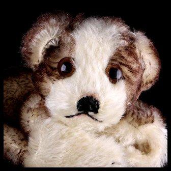 Rare Sweet Steiff Puppy Dog Hand Puppet Molly 2 IDs