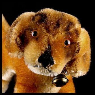 Little Sister Steiff 1960s Bazi Dachshund Puppy Dog Beautiful Coloring