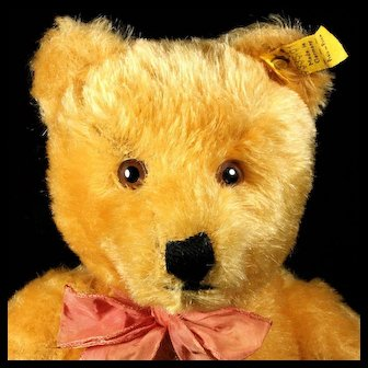 Extremely Sweet Big Brother Steiff Gold Blond 5xJointed Original Teddy Bear 2 IDs Growler
