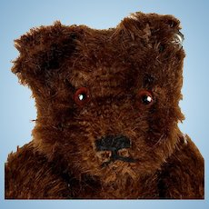 RARE Steiff 1949 5xJointed Dark Brown Original Teddy Bear, Button and US-Zone-Flag