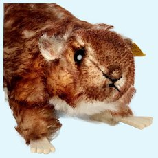 Big Brother Rare Steiff Murmy Marmot (Squirrel Cousin) All ID Beautiful Coloring 1960-1962 ONLY