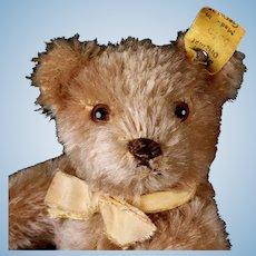 Little Brother Steiff 5xJointed Caramel Original Teddy Bear Earliest Series 2 IDs