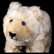 Rare Middle Brother Steiff Polar Bear Eisbaer Gorgeous Blue Glass Eyes ID