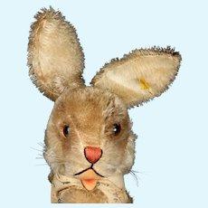 Rare Rare Rare BIG Sister Steiff Dressed Nikili Hase Rabbit Bunny Doll All ID 1958 Only!