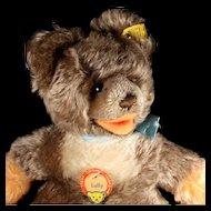 Big Brother Steiff Zotty Cousin Rare Lully Baby Teddy Bear All ID