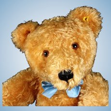 Steiff LARGEST (75 CM!) and Earliest Post-WWII 5xJointed Gold Original Teddy Bear 2 IDs
