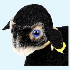 Rare Beautiful Steiff Little Sister Swapl Black Persian Lamb w Blue Glass Eyes 2 IDs