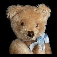 Rare Transitional Design 18 CM 5xJointed Steiff Original Teddy Bear ID
