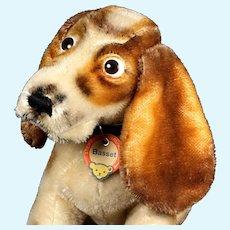 Big Brother Rare Steiff Basset Hound Puppy Dog AMAZING EVERYTHING! ID