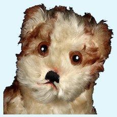 Rare Sweet Steiff Molly Puppy Dog 2 IDs