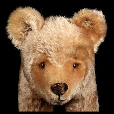 Rare Sweet Biggest Brother Steiff Jungbaer Standing Bear Cub ID