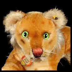 Rare Sweet Earliest Series Little Brother Steiff Reclining Lion Cub Jungloewe Wild Cat Gorgeous Coloring 2 IDs Magic Eyes!