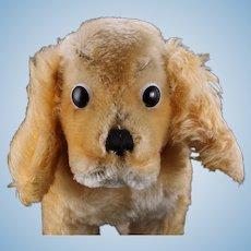 Steiff '60s Midsize Gold Standing Cockie Spaniel Puppy Dog 2 IDs