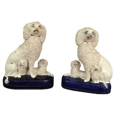 Pair of Staffordshire Poodles with their Puppies