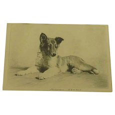 Morgan Dennis  Collie Puppy  Original etching