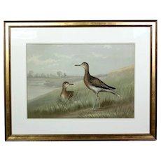 19th Century Hand Colored Lithograph Upland Plover by Alexander Pope Jr.