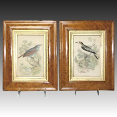 Superb Pair of Circa 1840 Bird's Eye Maple Frames With Ornithological Engravings