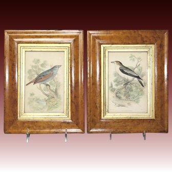 Superb Pair of Circa 1840 Bird's Eye Maple Frames With Ornithological Engravings