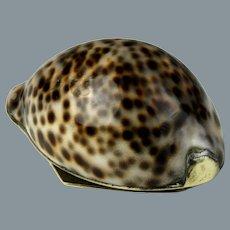 Circa 1820 Scottish Cowrie Shell Snuff Box with Brass Mounts