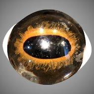 Vintage Handblown Glass Taxidermy large Cat Eye, Lion or Tiger