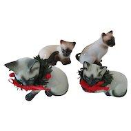Siamese and Himalayan Cats Enesco Taiwan China