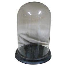 Antique Glass Display Dome  Wood Base & Wood Feet
