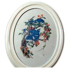 Pair of Oval Framed Vintage Bird Prints
