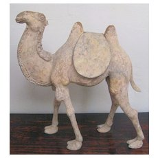 Superb Chinese Tang Dynasty Unglazed Pottery Bactrian Camel