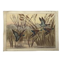 Maurice Taquoy (1878-1952) French well listed artist colored print of mallard ducks in flight